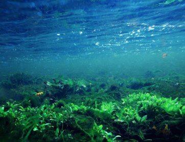 Algen unter Wasser Teaser