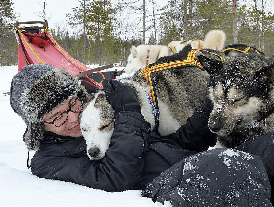 Husky, knuddeln, Schlittenhunde, Schnee, Winter