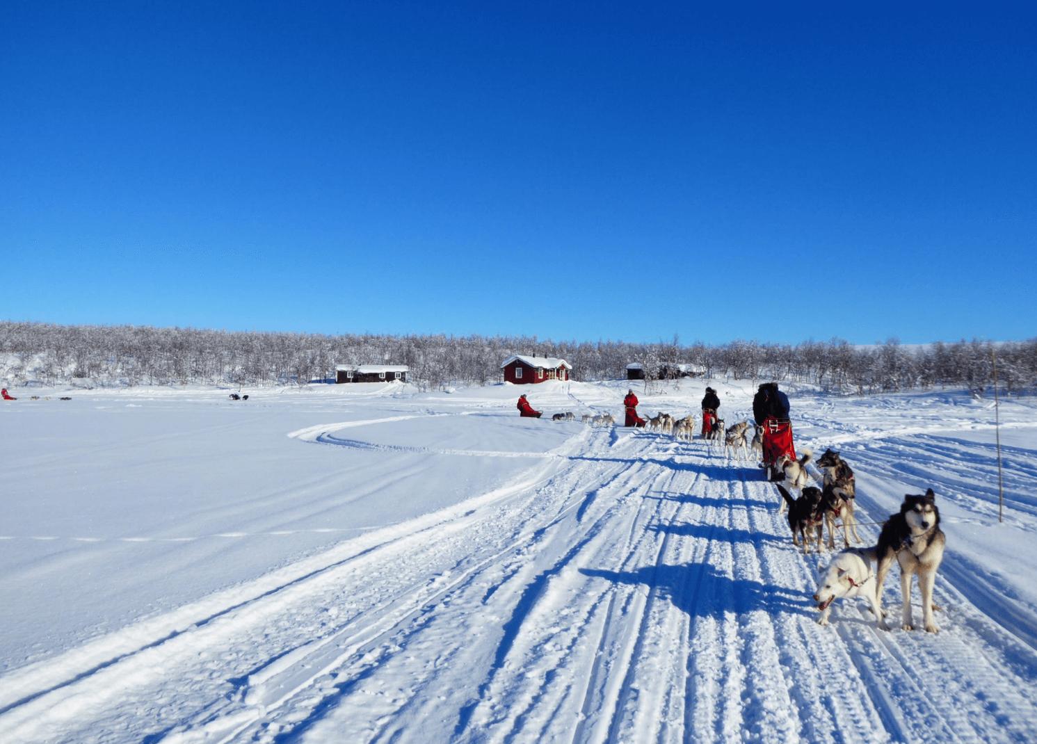Husky, Schnee, Winter, Eis, Schlittenhund