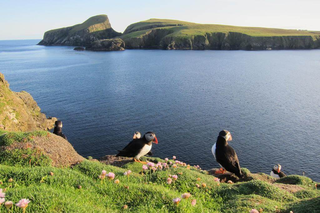 Vögel, Meer, Landschaft, Papageitaucher, Puffins