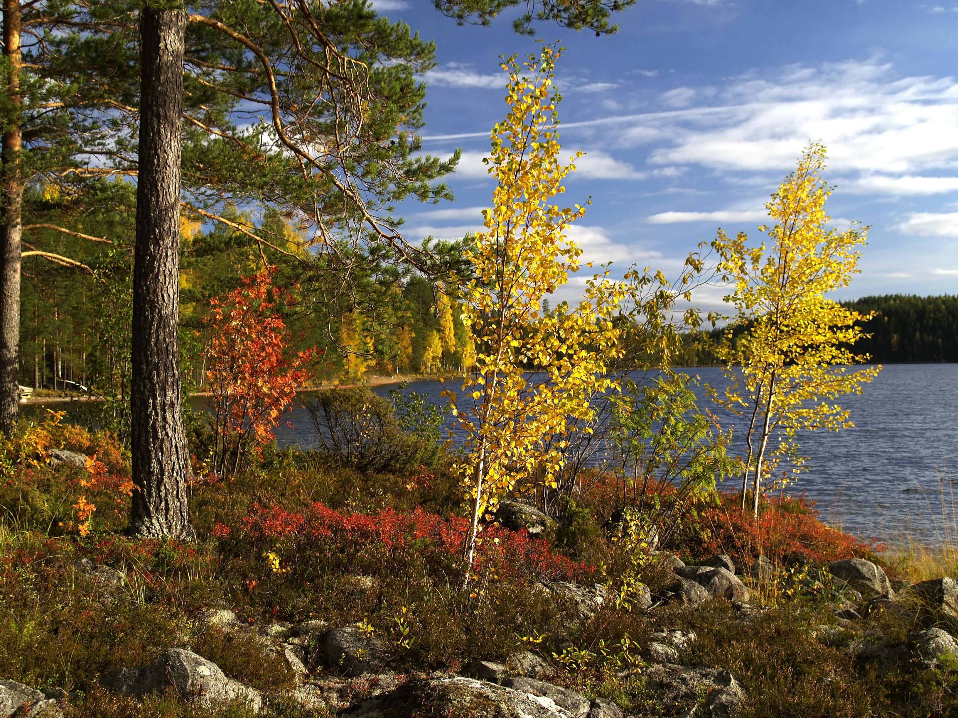 Bild Ruska in Finnland