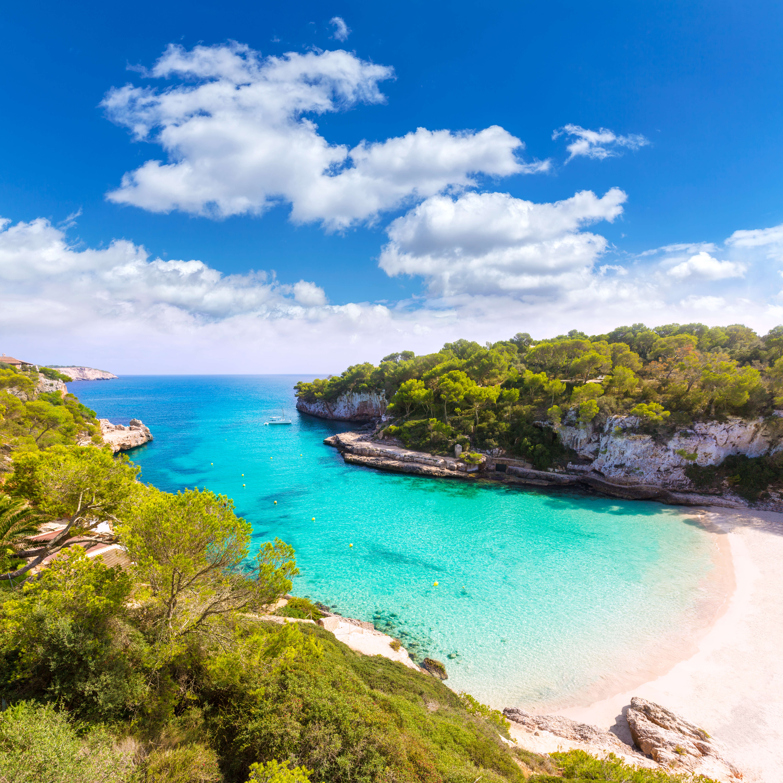 Bild Mallorca auch im Winter genießen, Bucht, Strand, Küste, Bäume, Meer