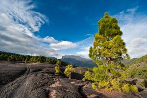 Dirt road through the beautiful lava landscape on the Cumbre Nueva in La Palma, Canary islands, Spain