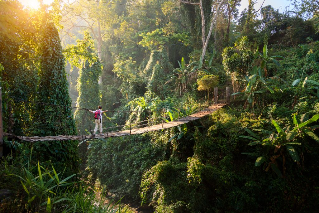 Bild Regenwald in Thailand