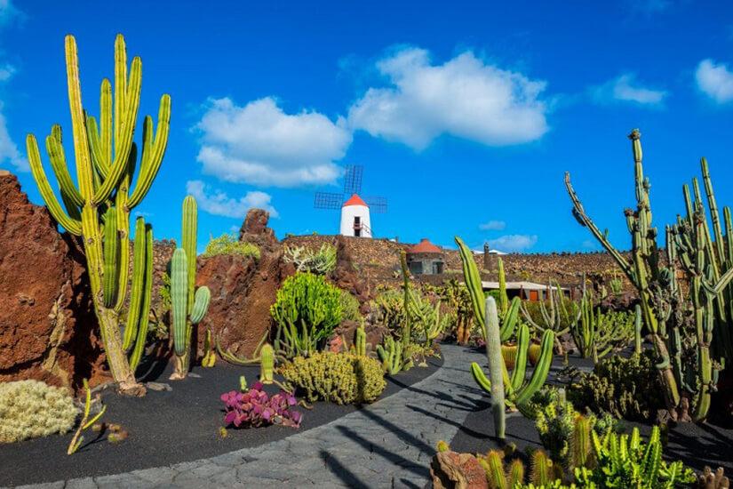 Katusgarten auf Lanzarote