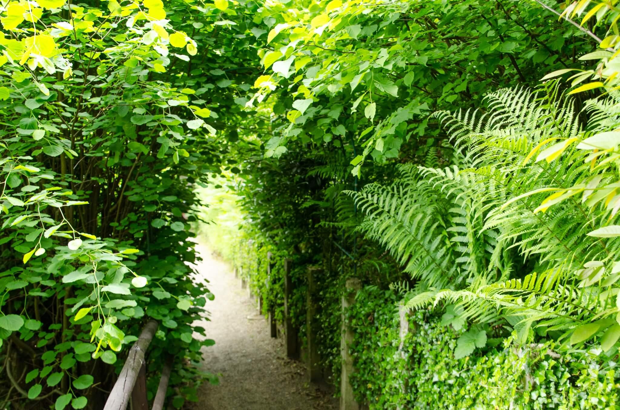 Weg im Märchenwald