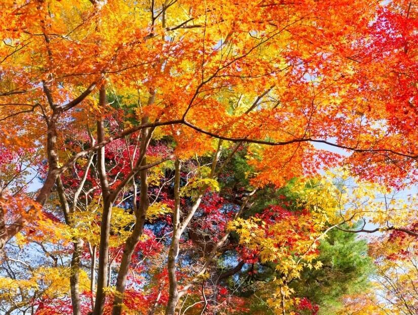 Indian-Summer Laubbäume