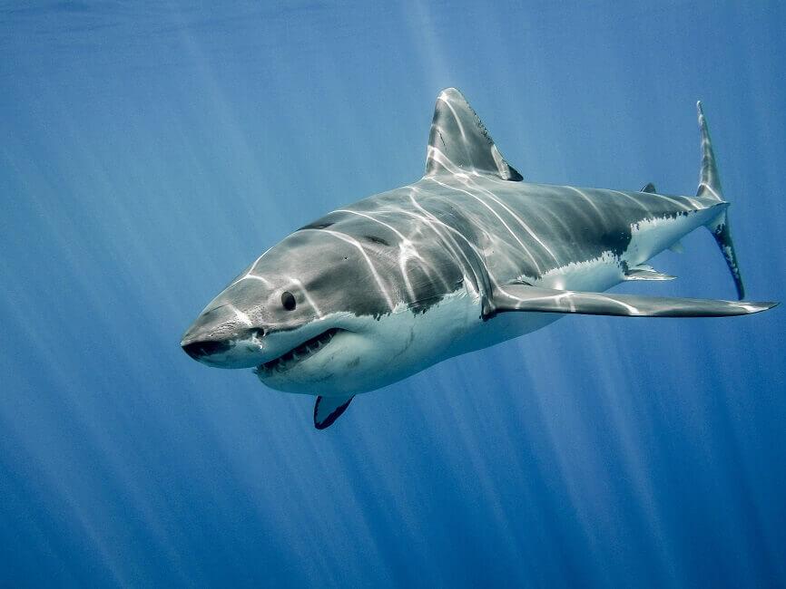 Haie Im Mittelmeer Wie Gefahrlich Werden Uns Die Raubtiere