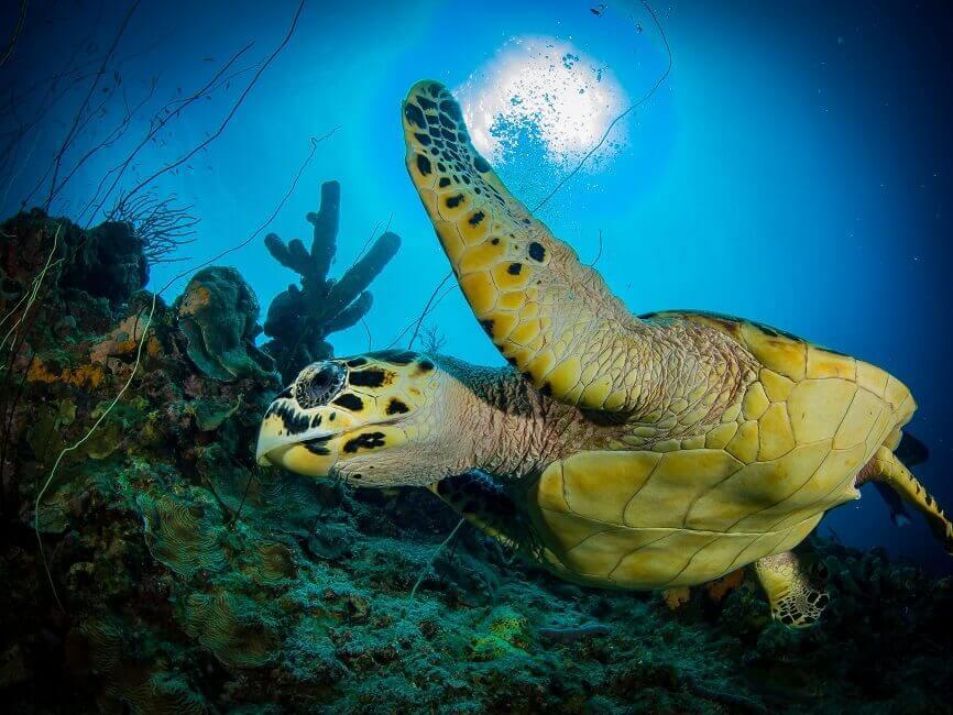 Unterwasseraufnahme einer Meeresschildkröte