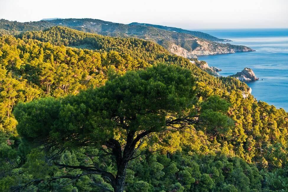 Aussicht auf Skopelos