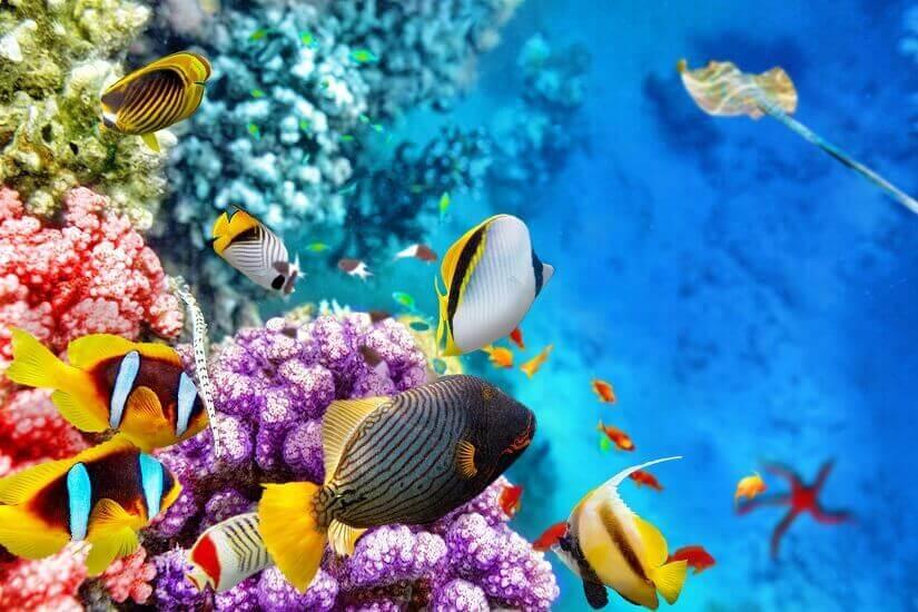 Größtes Korallenriff der Erde: Das Great Barrier Reef in Australien