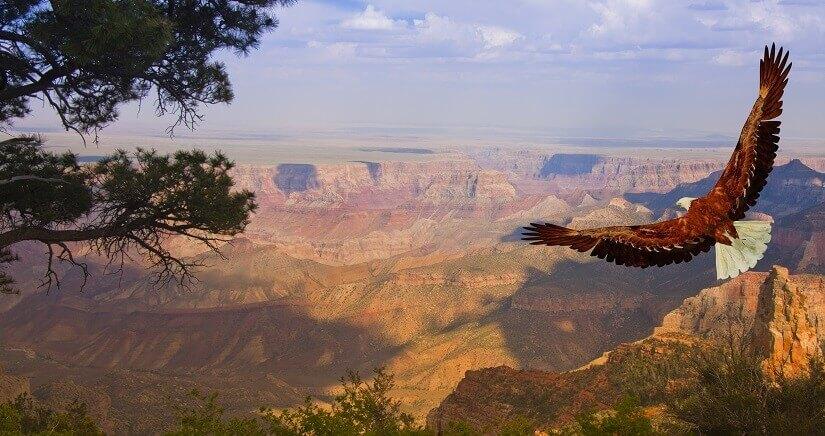 Zu den Aktivitäten am Grand Canyon zählt auch die Tierbeobachtung.