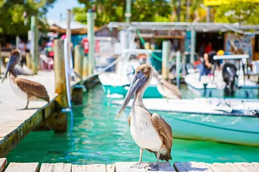 Bild Urlaub im exotischen Florida