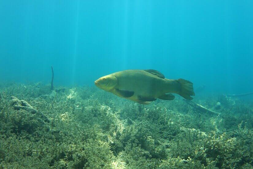 Bild Fisch im See entdecken