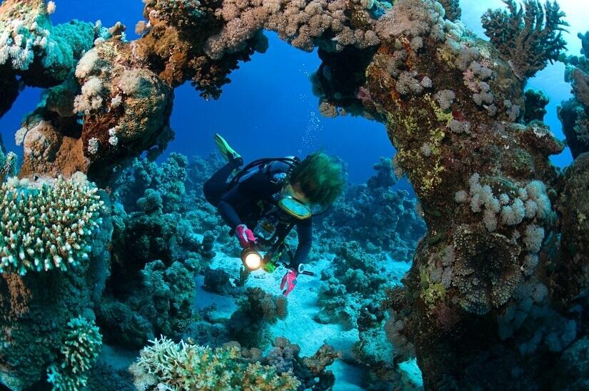 Bild Tauchen im Roten Meer vor Ägypten