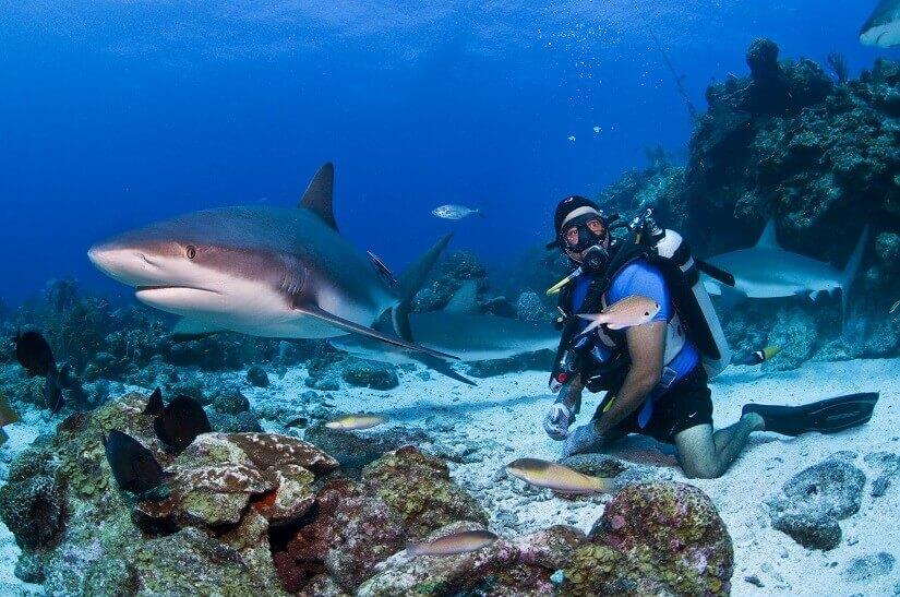 Bild Mit Haien in der Karibik tauchen