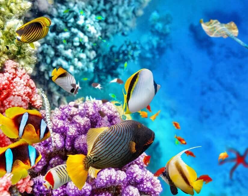 Bild Riff und Korallenfische in Australien