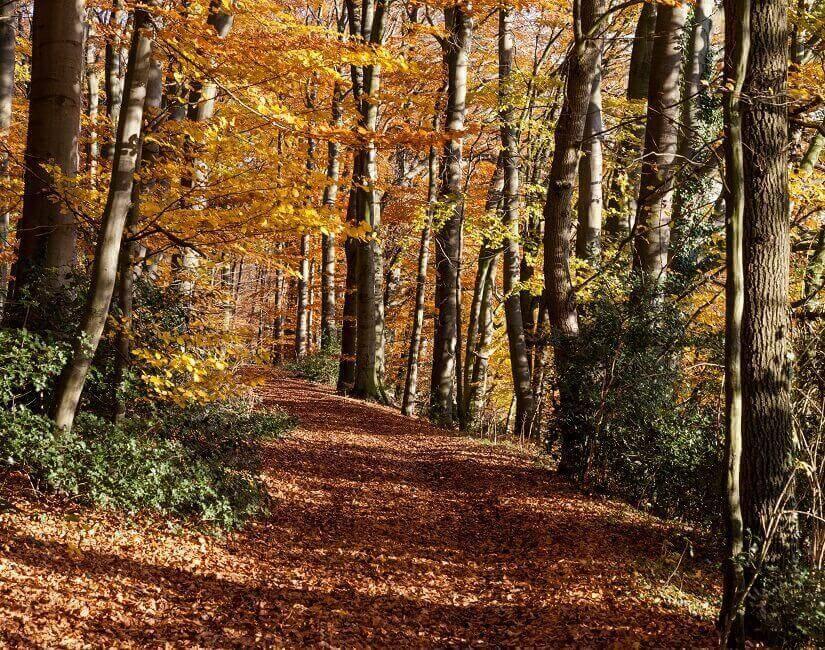 Bild Der Oktober lädt zum Wandern ein