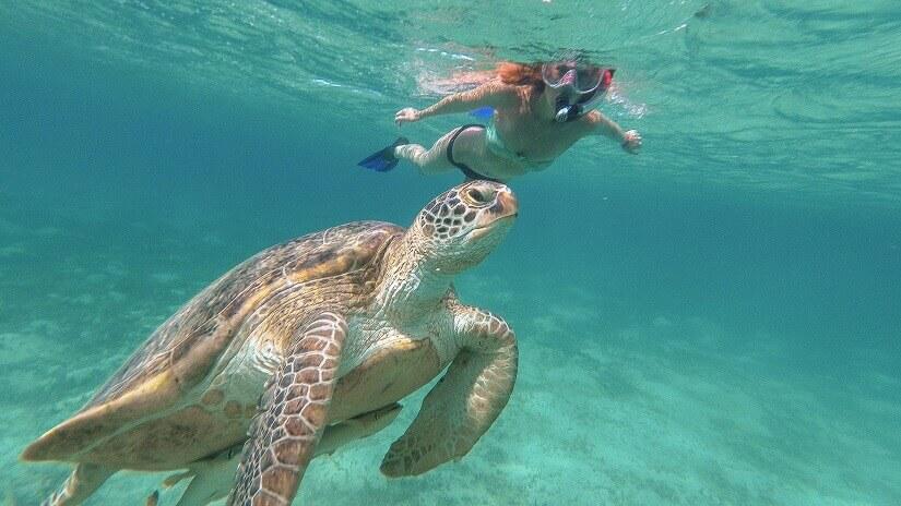 Schnorchelnde Frau mit Schildkröte im Roten Meer