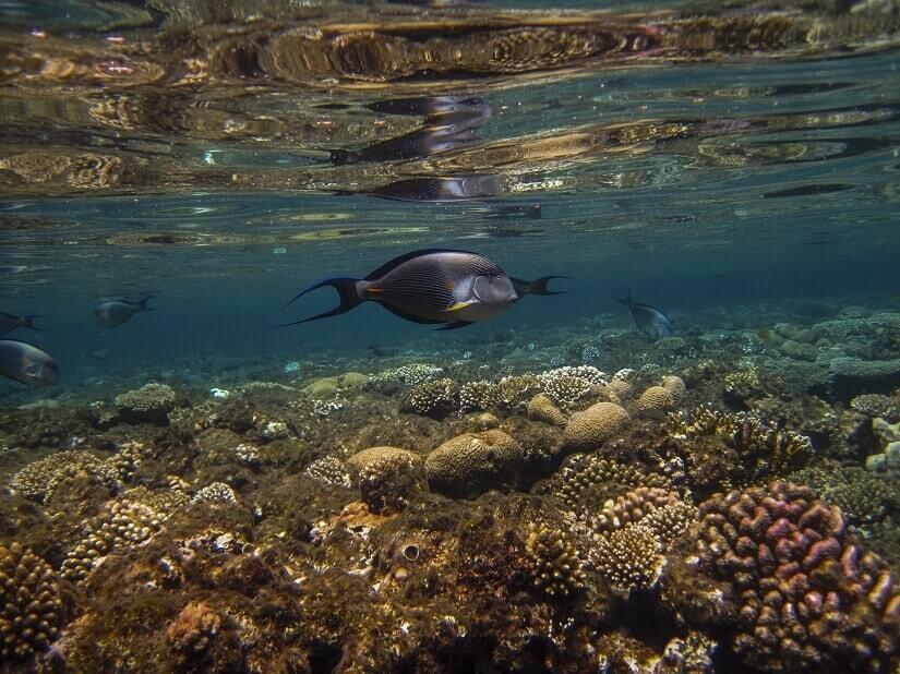 Unterwasserwelt bei Hurghada