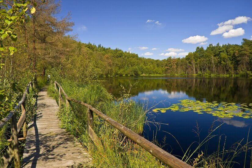 See im Nationalpark Müritz
