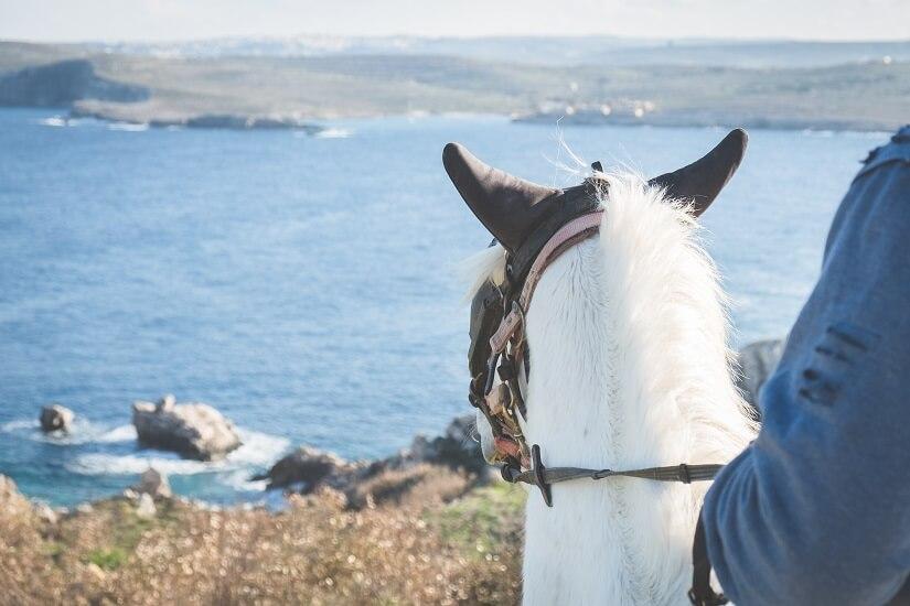 Bild Blick aufs Meer vom Pferd aus