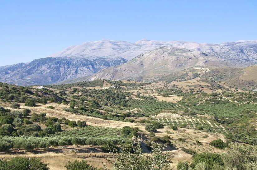 Olivenbäume vor Bergen auf Kreta