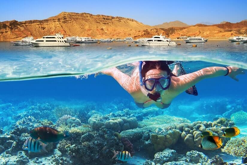 Bild Tauchurlaub am Roten Meer