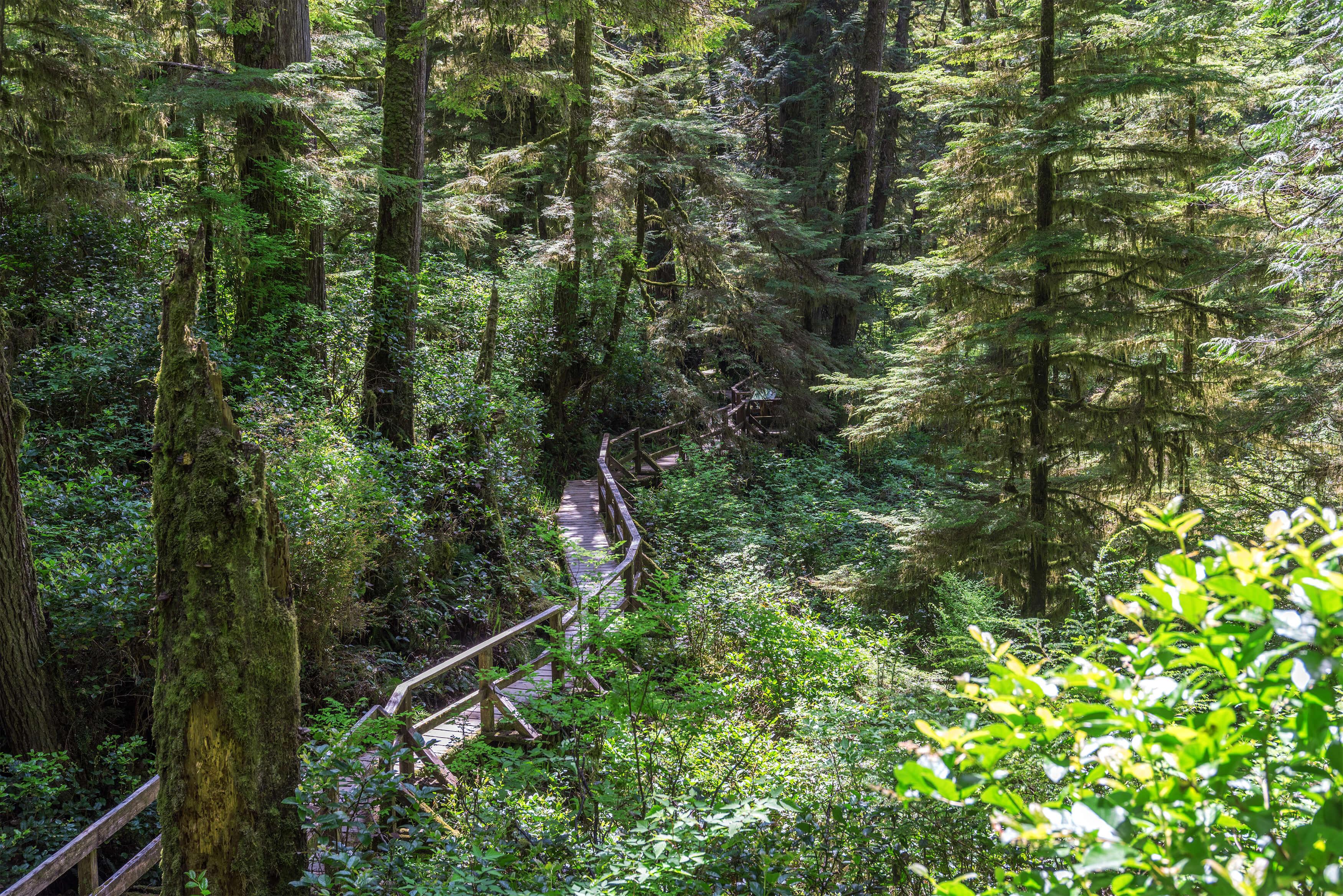 British Columbia Pacifik Rim Nationalpark