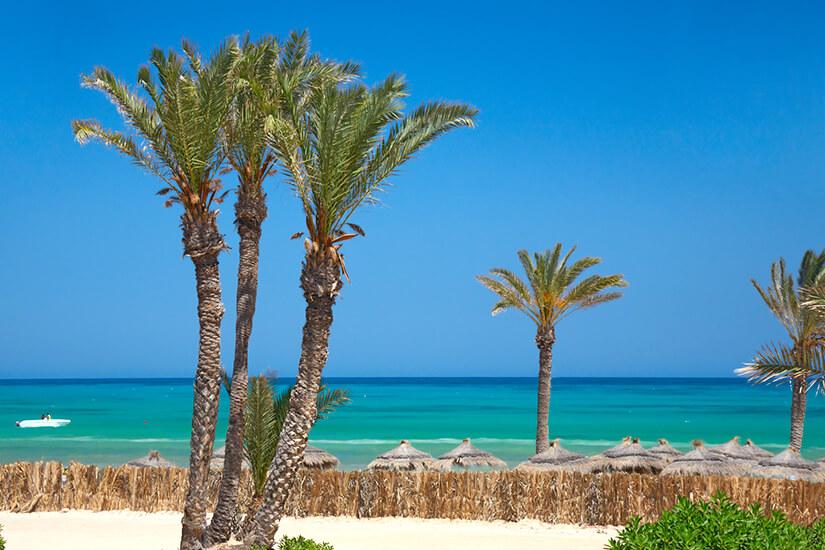 Palmen und Strand auf Djerba