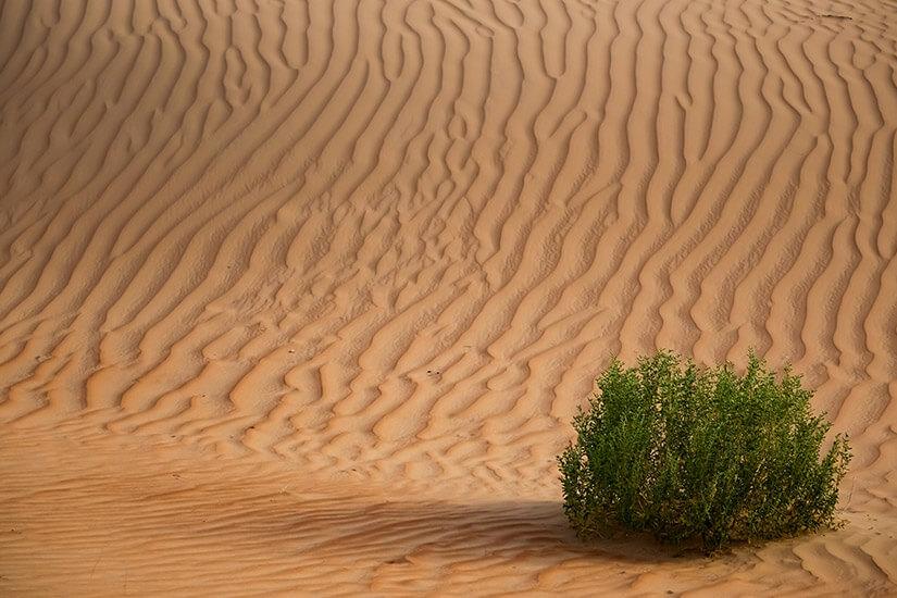 Hohe Dünen in der Sandwüste