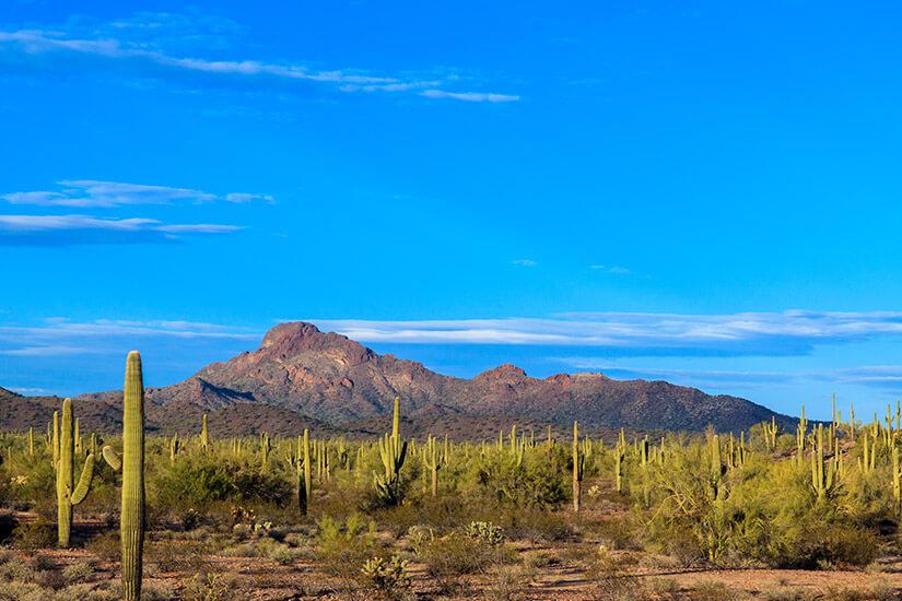Typisch Western Sonora-Wüste