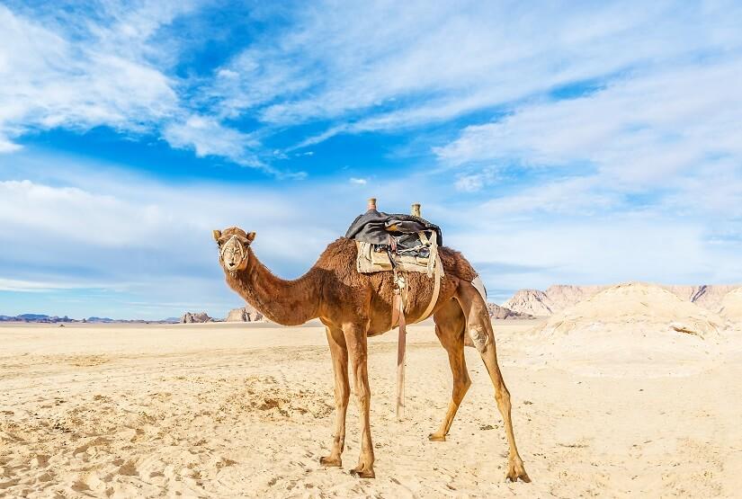 Ausflug mit dem Kamel