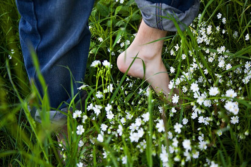 Im Gras lauern Zecken