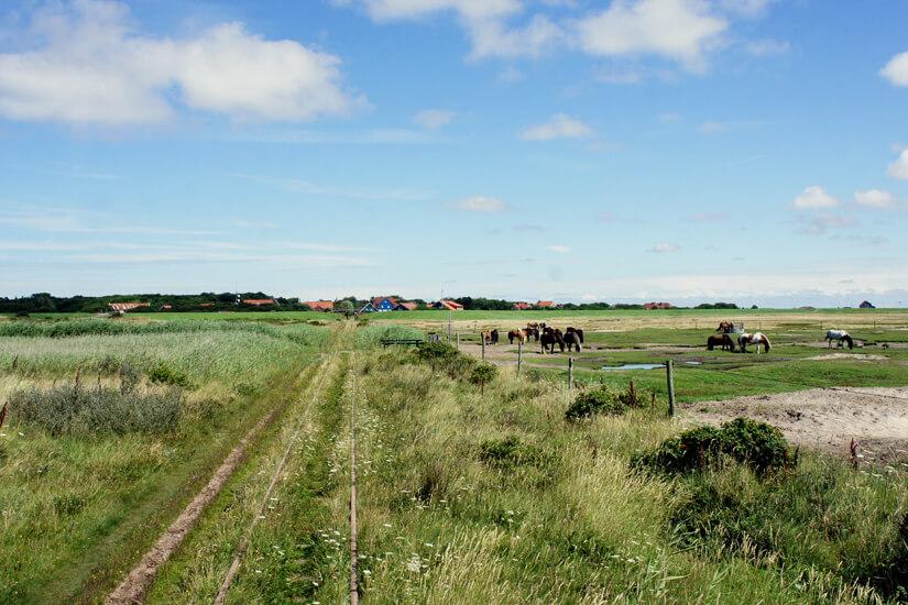 Nostalgische Pferdebahn auf Spiekeroog