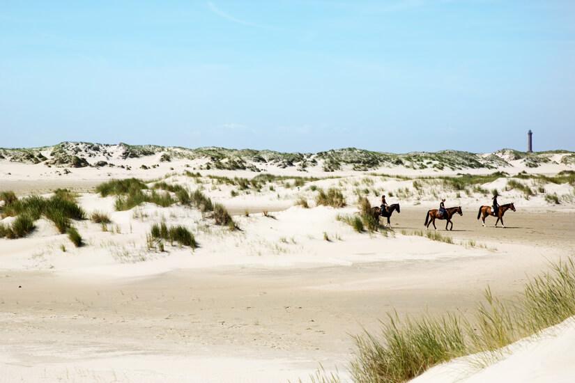 Pferdeausflug auf Norderney