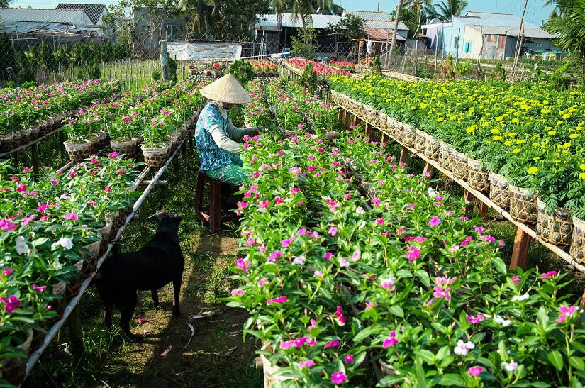 Blumenfarm in Sa Dec