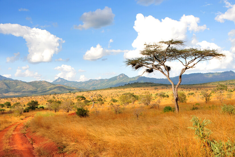 Savanne in Taita Hills