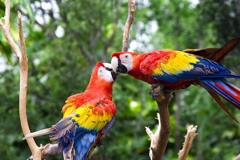 Papageien hautnah erleben