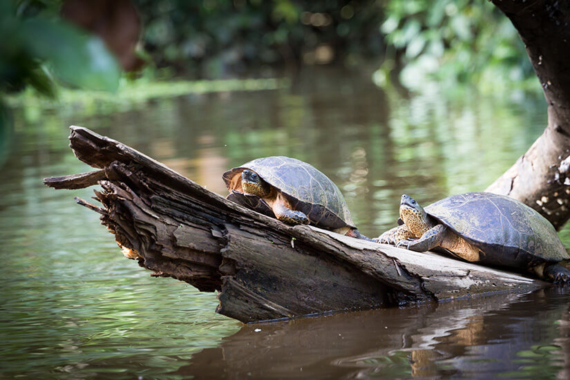 Schildkröten beobachten