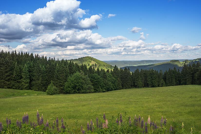 Der Thüringer Wald im Sommer