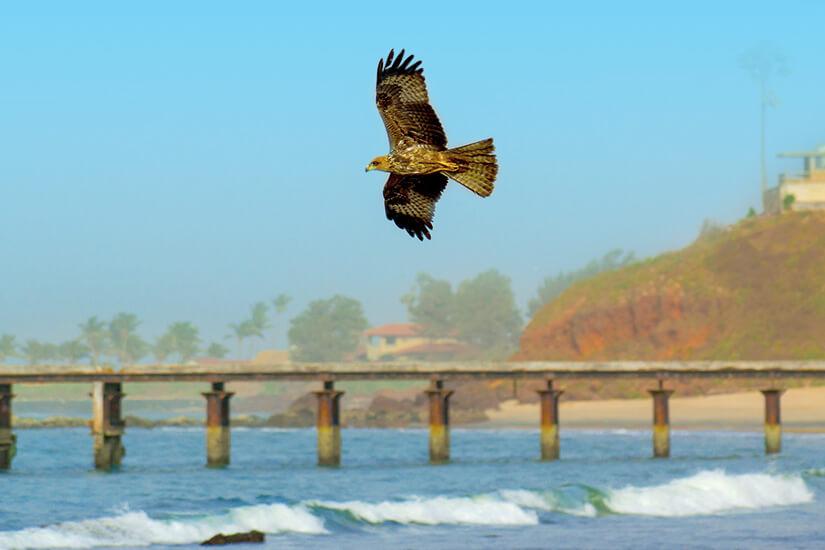 Vögel in Bakau beobachten