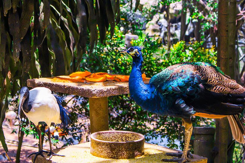 Vögel im Bird Park Kuala Lumpur