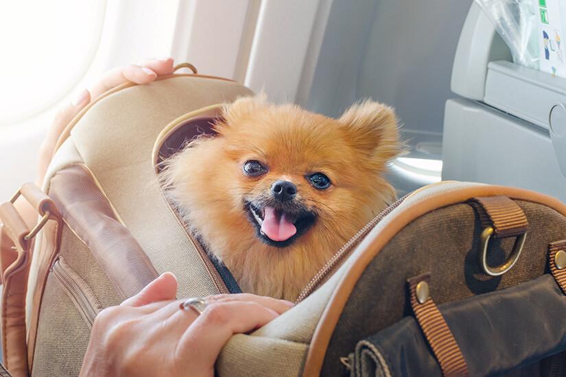 Hund in Flugkabine