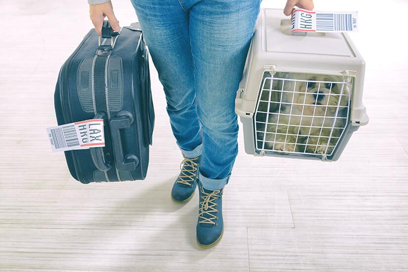 Hund in Transportbox am Flughafen