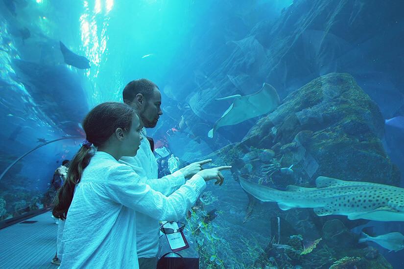 Tolle Sicht im Dubai Aquarium