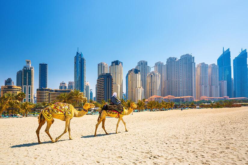 Kamele vor der Silhouette Dubais