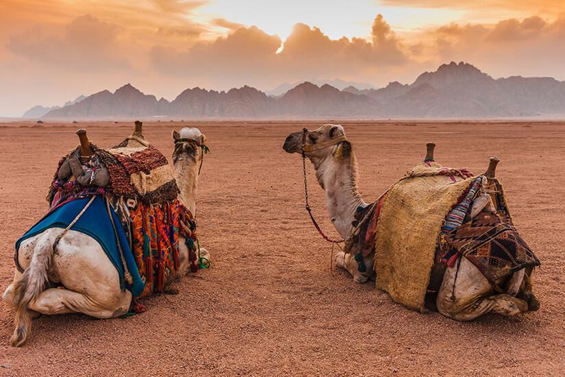 Die Wüste entdecken