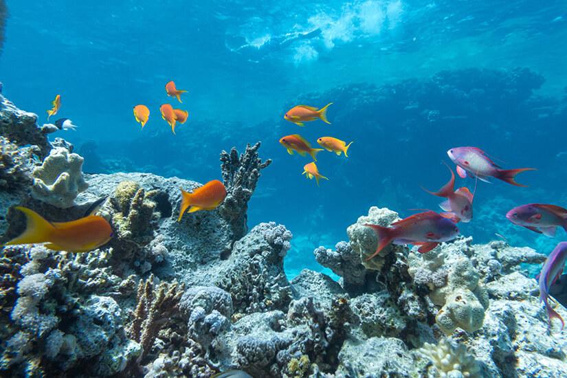 Die Unterwasserwelt beim Schnorcheln bestaunen