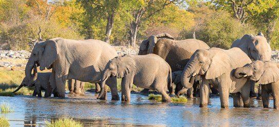Rundreise: Namibia & Botswana live